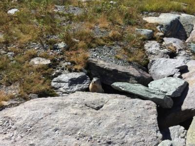 ete marmotte rocher